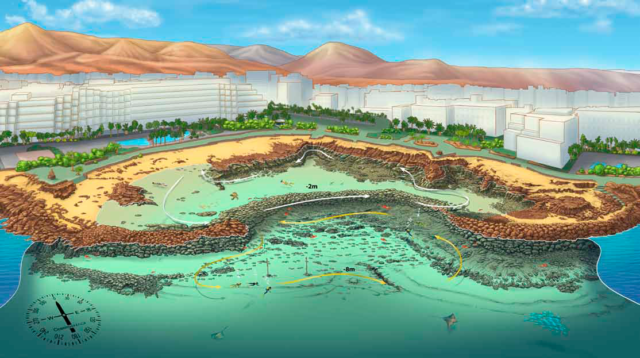 Lee más sobre el artículo Playa Flamingo
