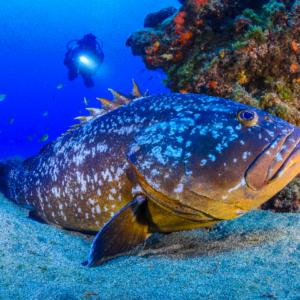 PADI Advanced Open Water Diver en Lanzarote
