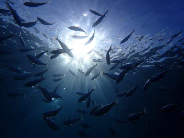 Lee más sobre el artículo El buceo en Puerto del Carmen Lanzarote